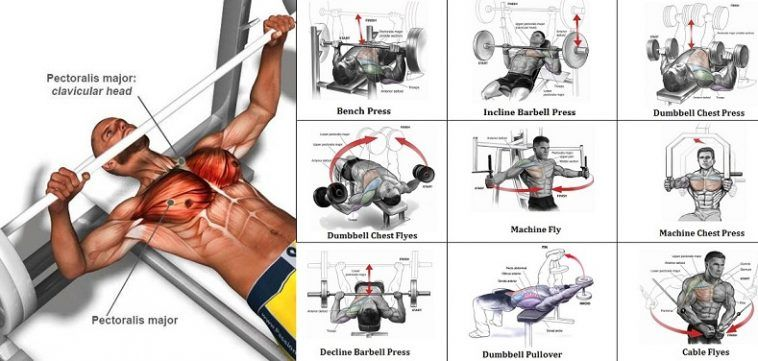 Exercises For Your Upper And Lower Chest