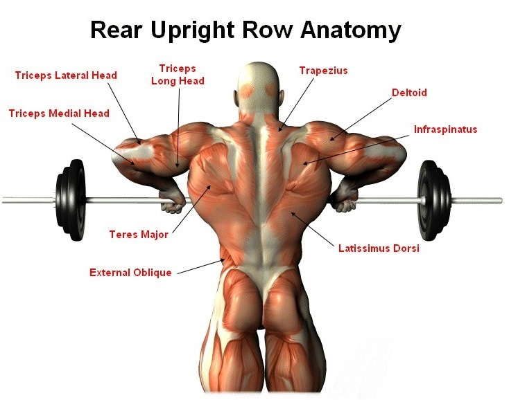 How To Do Barbell Upright Row