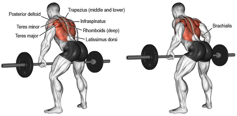 Bent-Over Barbell Rows